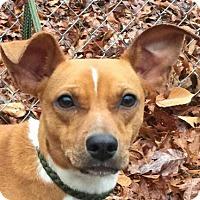 Adopt A Pet :: Judy - Washington, DC