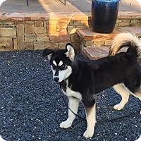 Adopt A Pet :: Cash - Roswell, GA
