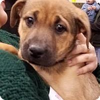 Adopt A Pet :: Mozzarella - Gainesville, FL
