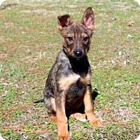 Adopt A Pet :: PUPPY STRYKER - Washington, DC