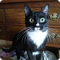 Adopt A Pet :: Rona - Grand Ledge, MI