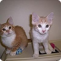Adopt A Pet :: Tigger & Peachy - Pineville, NC