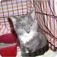 Adopt A Pet :: Maddie - Hamburg, NY