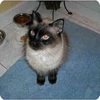 Adopt A Pet :: Jackson - Arlington, VA