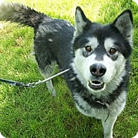 Adopt A Pet :: Daphne - Augusta County, VA
