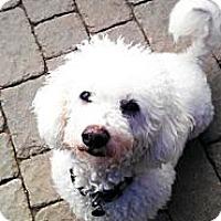 Adopt A Pet :: Coconut - Vaudreuil-Dorion, QC