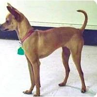 Adopt A Pet :: Katrina - Mooy, AL
