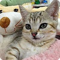 Adopt A Pet :: Rockie - Monroe, GA