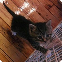 Adopt A Pet :: 2 Kittens - Slatington, PA