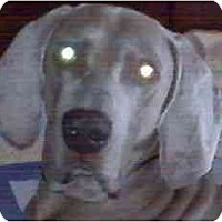Adopt A Pet :: Dmitri  **ADOPTED** - Eustis, FL