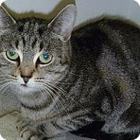 Adopt A Pet :: Lucy - Hamburg, NY