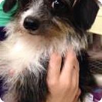 Adopt A Pet :: Romeo - Gainesville, FL