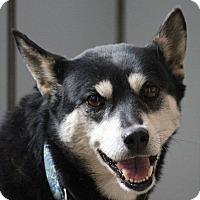 Adopt A Pet :: Miyo - Manassas, VA