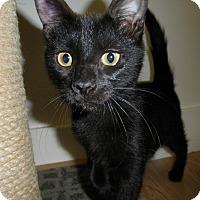 Adopt A Pet :: Minette - Milwaukee, WI
