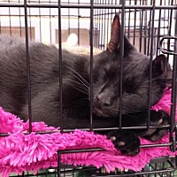 Adopt A Pet :: Ninja - St. Cloud, FL