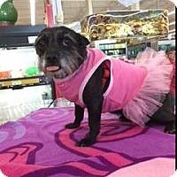 Adopt A Pet :: LANNA LAMAR - Phoenix, AZ