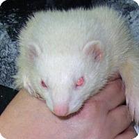 Adopt A Pet :: Akasha - Balch Springs, TX