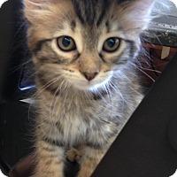 Adopt A Pet :: Nada - Delray Beach, FL