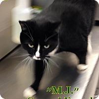 Adopt A Pet :: B-4 M.J. - Triadelphia, WV