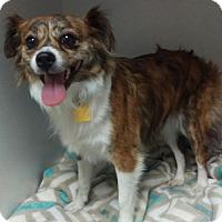 Adopt A Pet :: JoJo - Mesa, AZ