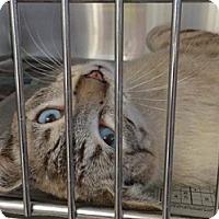 Adopt A Pet :: Lovebug - LaJolla, CA