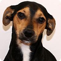 Adopt A Pet :: Oscar - Glastonbury, CT