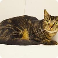 Adopt A Pet :: *PAULAPALOOZA! - Sacramento, CA