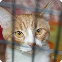 Adopt A Pet :: Ballerina - Covington, LA