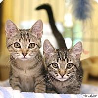 Adopt A Pet :: Jo_Jo/Nora - Westchester, CA