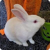 Adopt A Pet :: Manny - Alexandria, VA