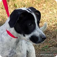 Adopt A Pet :: Popcorn - PRINCETON, KY
