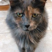Adopt A Pet :: Alexa - Cloquet, MN