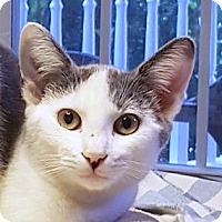 Adopt A Pet :: Adaline - Smithfield, NC