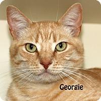 Adopt A Pet :: Georgie - Idaho Falls, ID