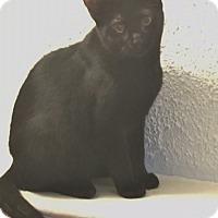 Adopt A Pet :: Rockford 6 (Tiffany) - Barrington Hills, IL
