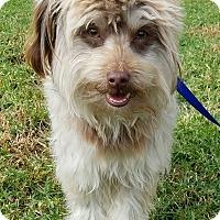 Adopt A Pet :: Bow - Los Angeles, CA