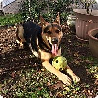 Adopt A Pet :: Bruno in Texarkana, TX - Texarkana, TX