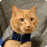 Adopt A Pet :: Max - Tega Cay, SC
