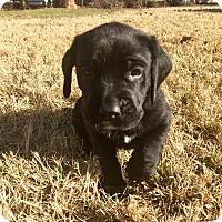 Adopt A Pet :: Magic - Norman, OK