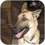 German Shepherd Dog Mix Dog for adoption in Colorado Springs, Colorado - Neiko
