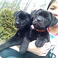 Adopt A Pet :: Samantha - Marlton, NJ