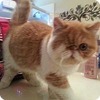 Adopt A Pet :: Winkie - Beverly Hills, CA