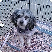 Adopt A Pet :: Henry - Toluca Lake, CA