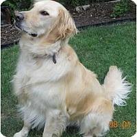 Adopt A Pet :: Zeb - Denver, CO