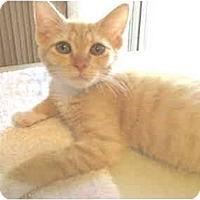 Adopt A Pet :: Quentin - Mesa, AZ