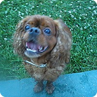 Adopt A Pet :: Reggie-New Jersey - Cumberland, MD