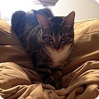 Adopt A Pet :: Addie - Houston, TX