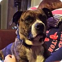 Adopt A Pet :: Zeus - Homer, NY