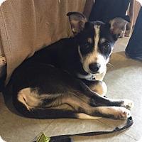 Adopt A Pet :: Riot - Saskatoon, SK