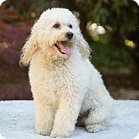 Adopt A Pet :: Andy - Salem, OR